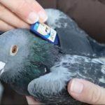 Nový spôsob zdieľania súborov – Pigeon upload